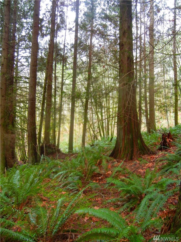 Photo 4 12409 Mountain Loop Hwy Granite Falls WA 98252