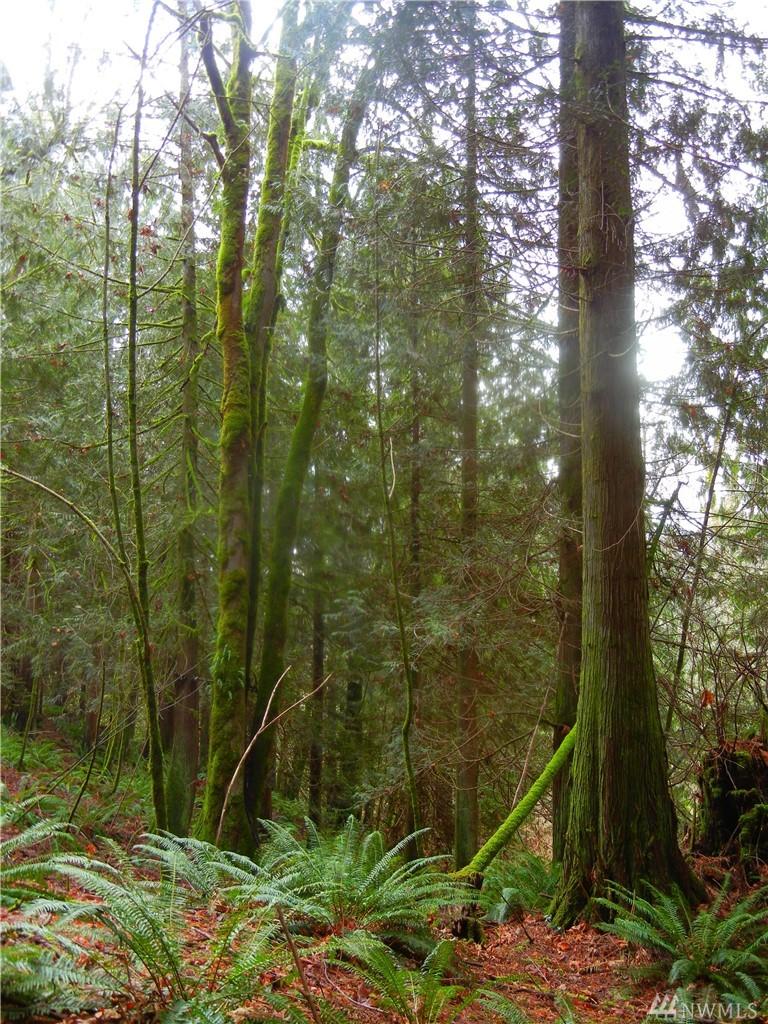 Photo 6 12409 Mountain Loop Hwy Granite Falls WA 98252